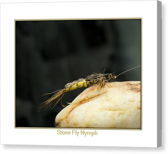 Stone Fly Nymph Canvas Print by Neal Blizzard