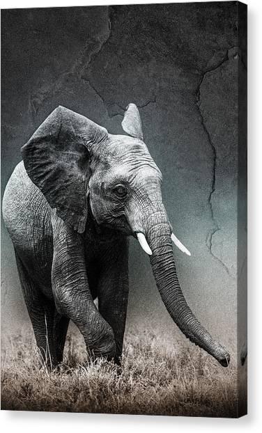 Stone Texture Elephant Canvas Print