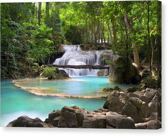 Stream With Waterfall In Tropical Forest Canvas Print