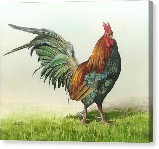 Strutting Canvas Print