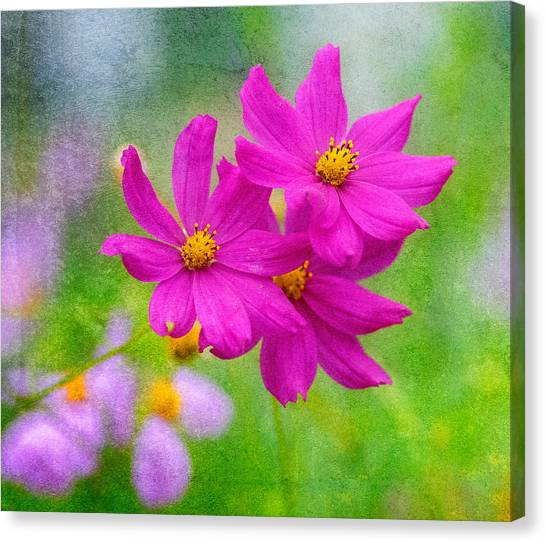 Canvas Print featuring the photograph Summer Garden by Garvin Hunter
