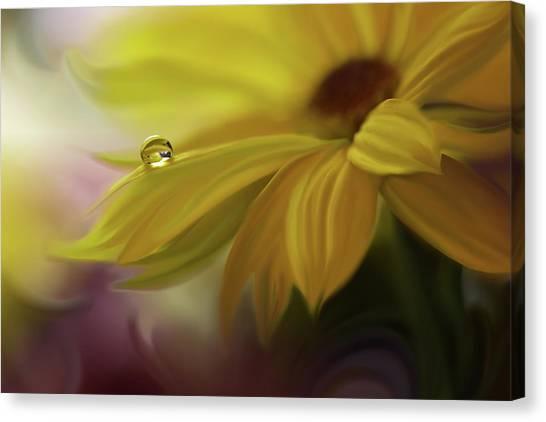 Drops Canvas Print - Sunbeam... by Juliana Nan