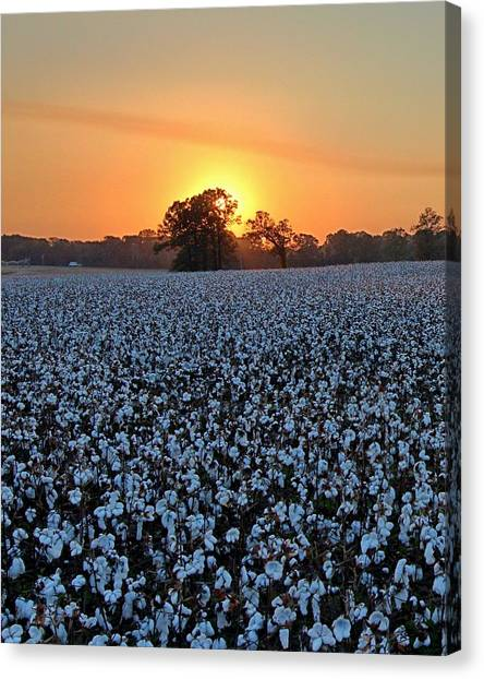 Sunset Over Cotton Canvas Print