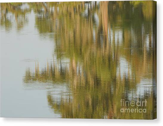 Swamp Reflections Canvas Print by Kelly Morvant