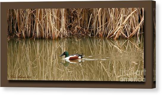 Matting Canvas Print - Swimming Among The Reeds by Chris Anderson