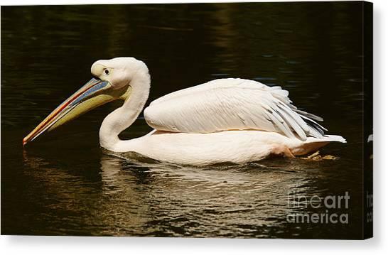 Swimming Pink Pelican Canvas Print
