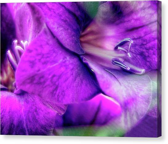 Sword Lily (gladiolus Hybrid) Canvas Print by Maria Mosolova/science Photo Library