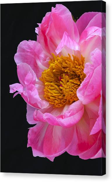 The Beauty Of Nature Canvas Print