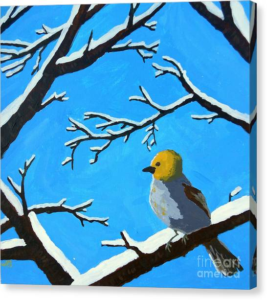 The Chilly Verdin Canvas Print