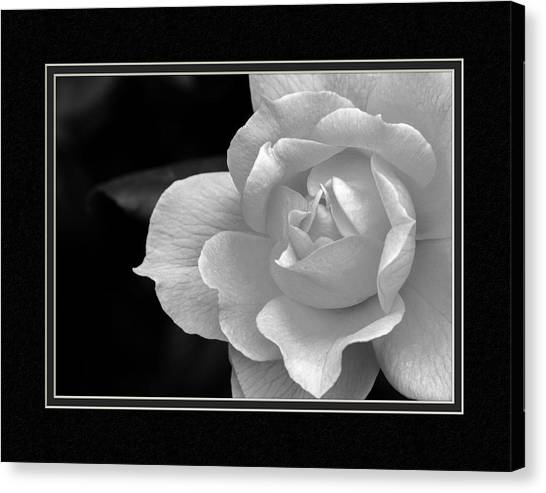 Matting Canvas Print - The Exquisiteness Of A Rose  by Charles Feagans