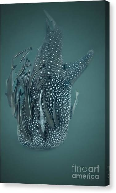 The Gentle Giant Canvas Print by Soren Egeberg