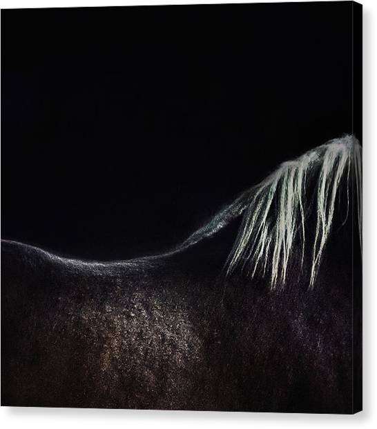 Abstract Horse Canvas Print - The Naked Horse by Piet Flour