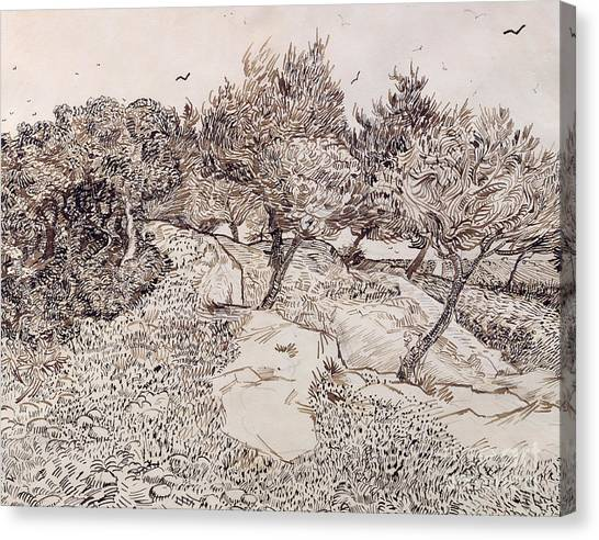 Vincent Van Gogh Canvas Print - The Olive Trees by Vincent Van Gogh