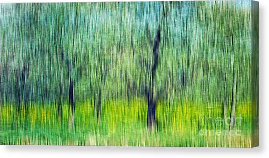 Wild Orchards Canvas Print - The Orchard by Darren Fisher