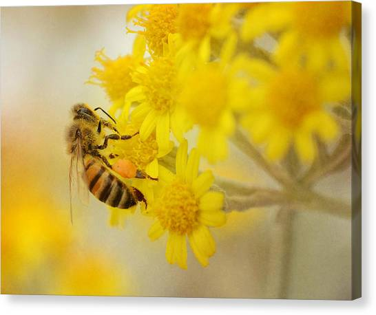 The Pollinator 2 Canvas Print