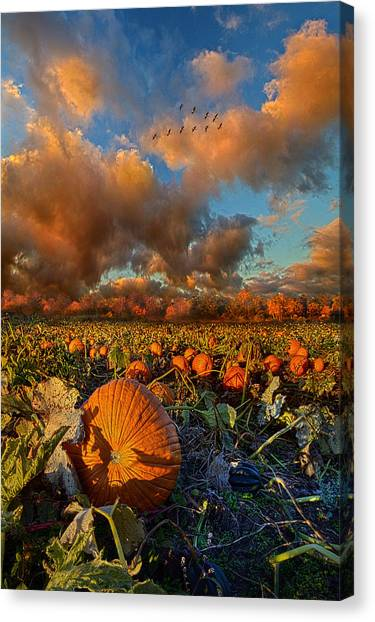 Pumpkin Patch Canvas Print - The Survivors by Phil Koch