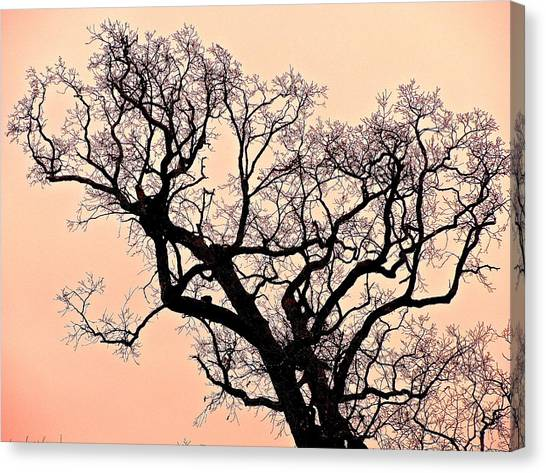 The Tree On Hobson Avenue Canvas Print