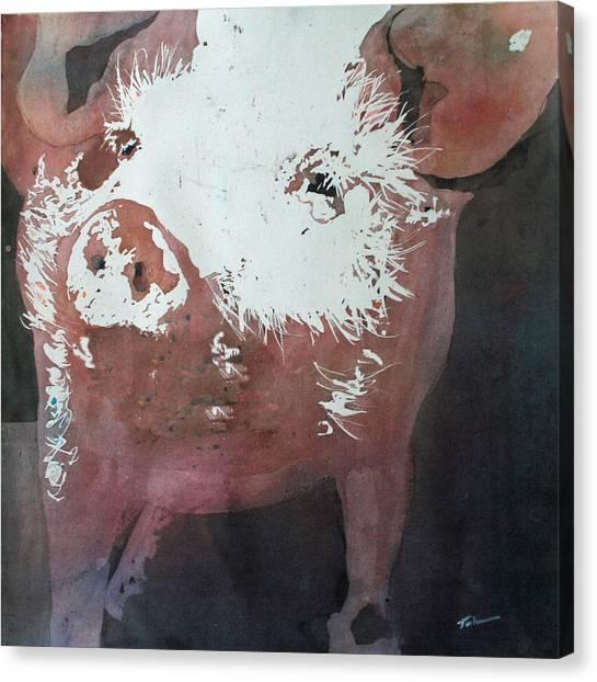 This Little Piggy Canvas Print by Tammy Tatum