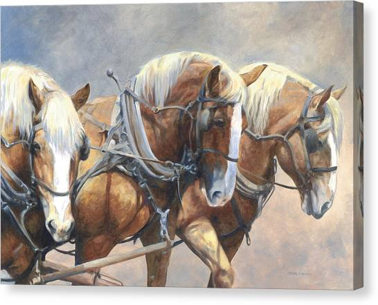 Draft Horses Canvas Print - Three Abreast by Bethany Caskey