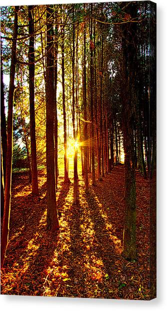 Picnic Table Canvas Print - Through The Pines by Phil Koch