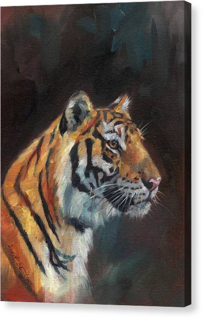 Siberian Cats Canvas Print - Tiger Portrait by David Stribbling
