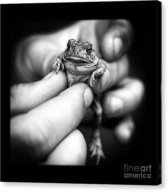 Frogs Canvas Print - Toad In Hand by Edward Fielding