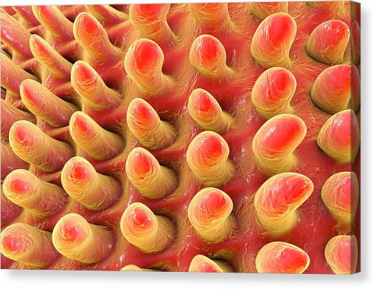 Tongue Surface Canvas Print by Kateryna Kon/science Photo Library