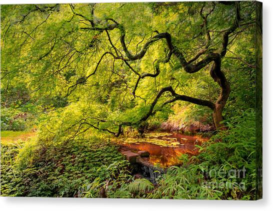 Tranquil Shade Canvas Print