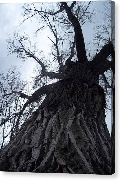 Tree Canvas Print by Angela Stout