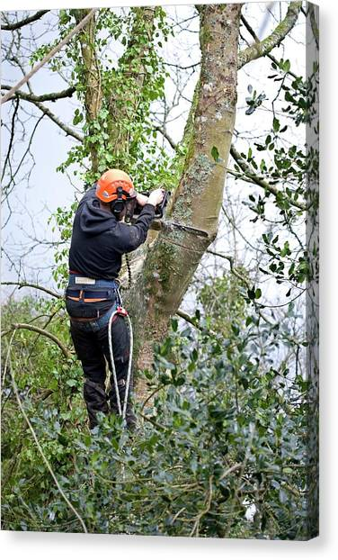 Chainsaw Canvas Print - Tree Pruning by Adam Hart-davis/science Photo Library