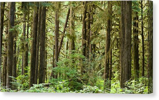 Olympic Peninsula Canvas Print - Trees In A Forest, Quinault Rainforest by Panoramic Images