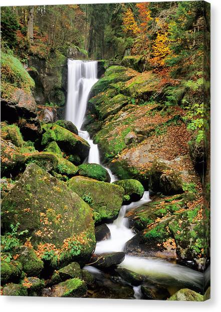 Fallen Leaf Canvas Print - Triberg Waterfall In Autumn, Black by Panoramic Images