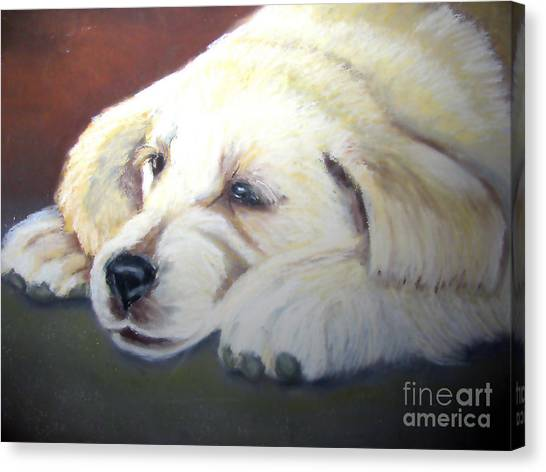 Tuckered Out Canvas Print by Amber Nissen