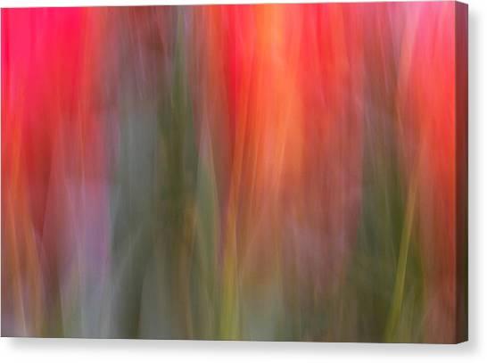 Tulip Waves Canvas Print