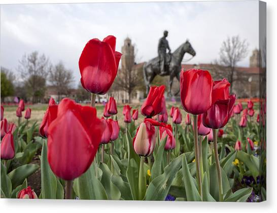 Tulips At Texas Tech University Canvas Print