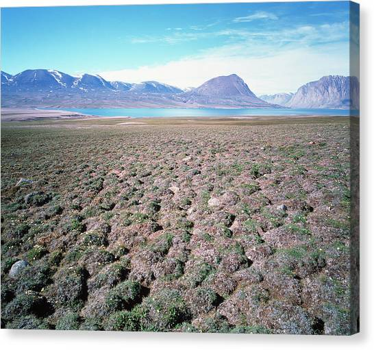Tundras Canvas Print - Tundra Hummocks by Simon Fraser/science Photo Library
