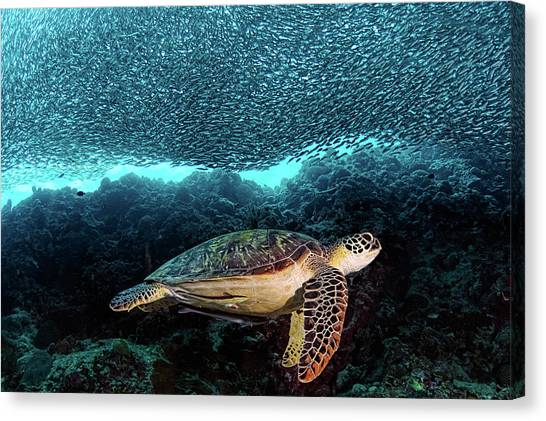 Scuba Diving Canvas Print - Turtle And Sardines by Henry Jager