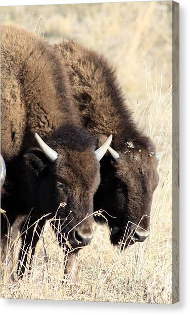 Twins Canvas Print by Rick Rauzi