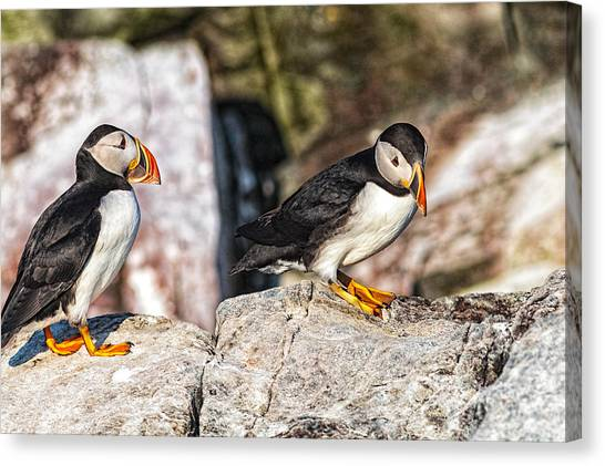 Canvas Print featuring the photograph Two Puffins by Perla Copernik