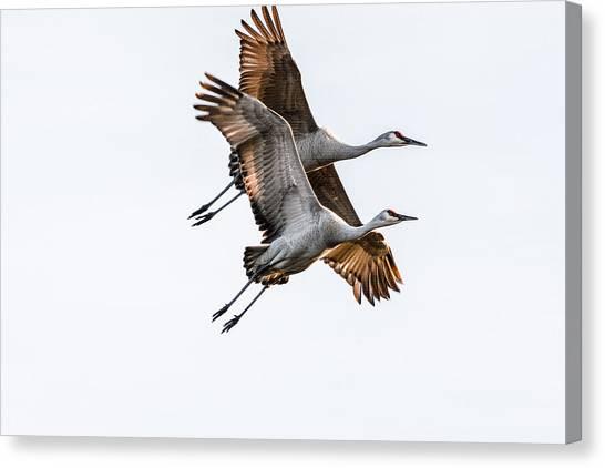 Two Sandhill Cranes Canvas Print
