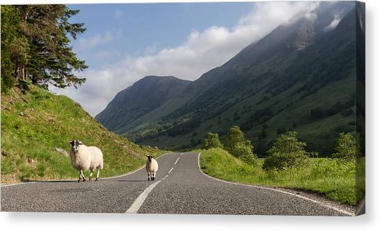 Two Sheeps Walking Along A Road In The Scottish Highlands Canvas Print by Leander Nardin