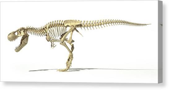 T-bone Canvas Print - Tyrannosaurus Rex Skeleton by Leonello Calvetti