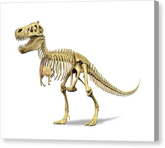Steak Canvas Print - Tyrannosaurus Rex Skeleton by Leonello Calvetti/science Photo Library