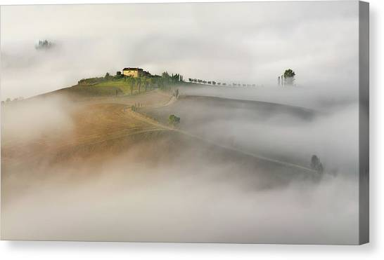 Cypress Canvas Print - Untitled by Izidor Gasperlin