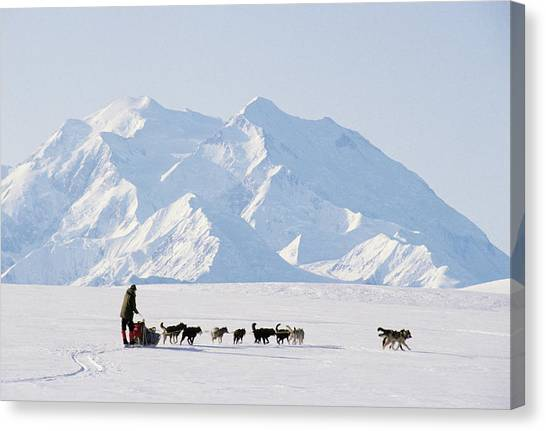Denali Canvas Print - Usa, Alaska, Sled Dogs, Park Ranger by Gerry Reynolds