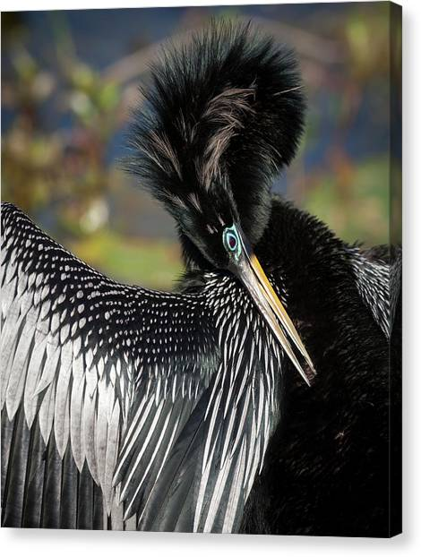 Anhinga Canvas Print - Usa, Florida, Everglades National Park by Jaynes Gallery
