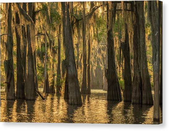 Atchafalaya Basin Canvas Print - Usa, Louisiana, Atchafalaya Basin by Jaynes Gallery