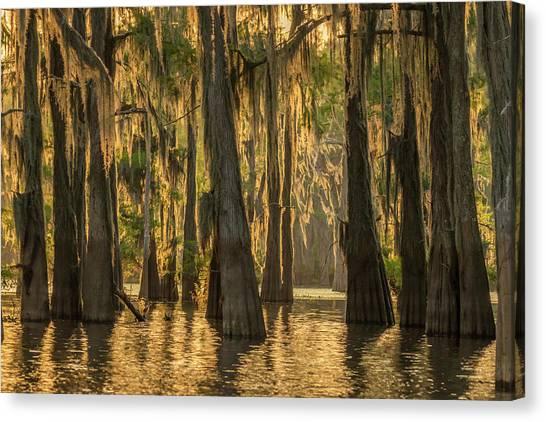 Atchafalaya Basin Canvas Print - Usa, Louisiana, Atchafalaya Basin by Jaynes Gallery