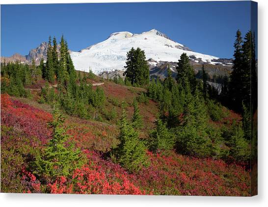 Usa, Washington State, Mount Baker Canvas Print by Jamie and Judy Wild