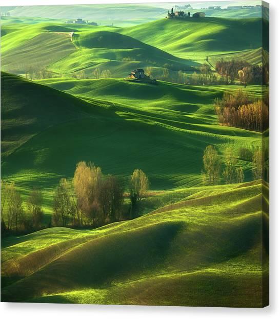 Cypress Canvas Print - Valley... by Krzysztof Browko